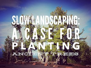 Slow Landscaping: A Case For Planting Ancient Trees
