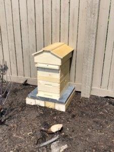 Backyard Bees – The Beginning