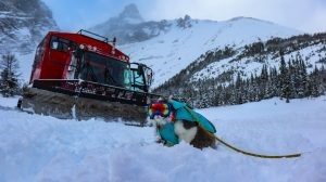 "LISTEN:  Meet Gary the ""Meowtaineer"" – Alberta's Hiking, Kayaking, & Skiing Rescue Cat!"