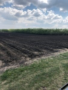 Edgar Farms, Asparagus + A Spring Recipe