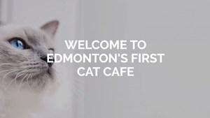 LISTEN: Edmonton's First Cat Cafe
