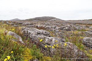 Hiking in Burren National Park- An Unexpected Landscape in Ireland