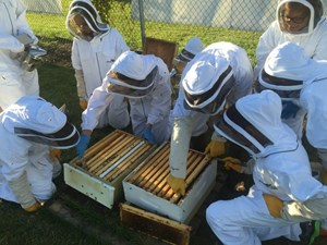 Northlands Youth Beekeeping Club