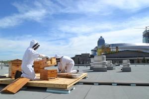 Urban Beekeeping Project Tours