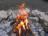 Bonfire Program: Night Creatures
