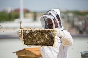 Lunch and Learn: Urban Beekeeping Project at MacEwan