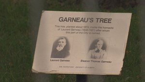 Wood from Edmonton's historic Garneau Tree salvaged for descendants of man who planted it