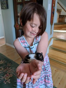 Travelling N.W.T. hamster escapes on vacation, finds his own ride back home